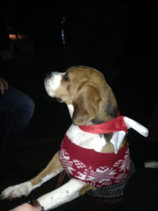THE BULLS HEAD WINNER OF THE CHRISTMAS JUMPER